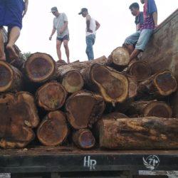 Polisi Tangkap Illegal Logging di Bandar Lampung