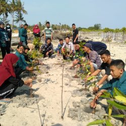Tanam 600 Bibit Mangrove, PMII Pertanian Gandeng Dinas Lingkungan Hidup