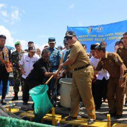 Kembangkan Potensi Laut Lampung, Gubernur Arinal Panen Perdana Keramba Apung Hasil Budidaya Polinela
