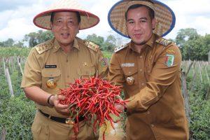 Gubernur Arinal Beri Solusi Atasi Derita Petani Cabai Tegineneng dan Bekri